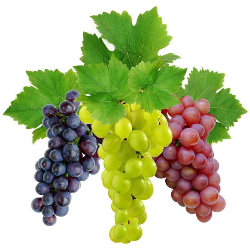 Разновидности винограда