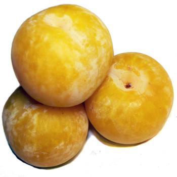 Желтая слива калорийность